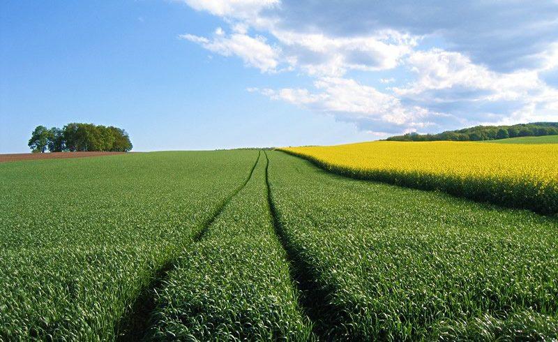 Un OUI clair pour l'initiative de la souveraineté alimentaire